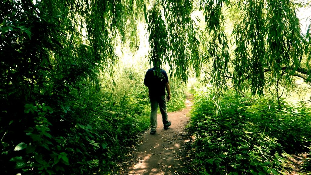 Shady Willow Tree Path York River Ouse Walk